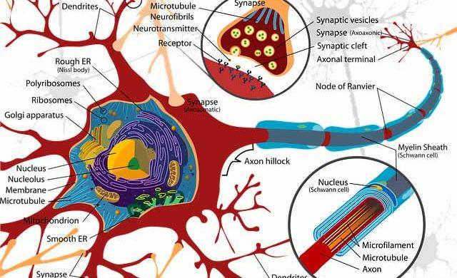 Los últimos avances y cursos de neuromodulación como neuromodulación percutánea (NMP) y electroneuroacupuntura (ENA), se posicionan hoy en día como la solución más eficaz frente a patologías con dolor agudo en la clínica de fisioterapia.